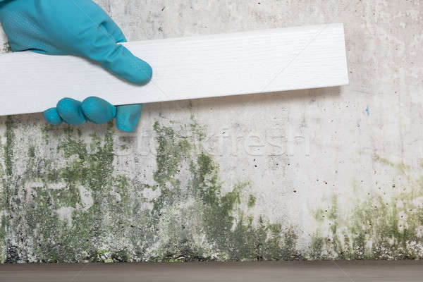 Person Placing Tiles On Moldy Wall Stock photo © AndreyPopov