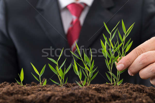 Businessman Planting Sapling Stock photo © AndreyPopov