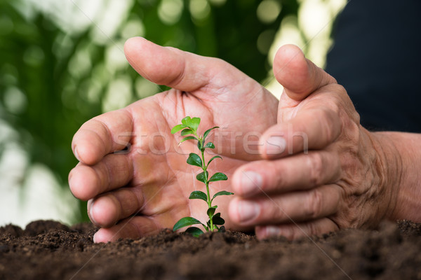 Businessman's Hands Protecting Plant On Land Stock photo © AndreyPopov