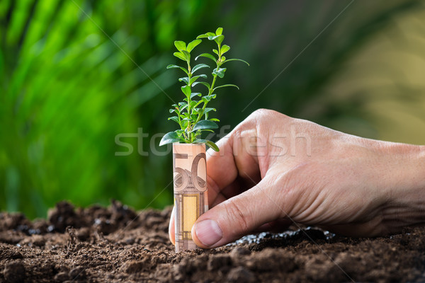 Businessman's Hands Protecting Plant Rolled With Euro Note Stock photo © AndreyPopov