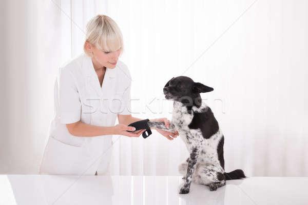 Female Vet Putting Bandage On Dog's Paw Stock photo © AndreyPopov