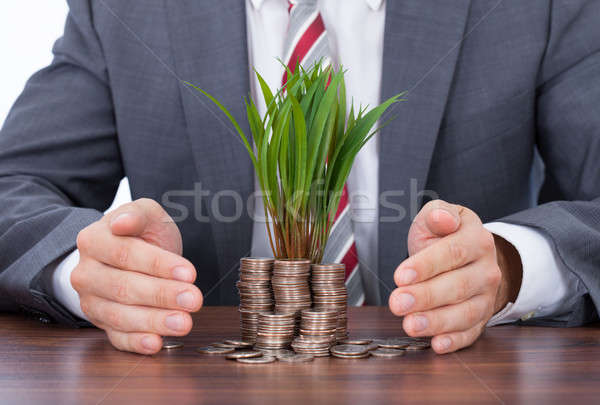 Businessman Protecting Saplings On Coin Stacks Stock photo © AndreyPopov