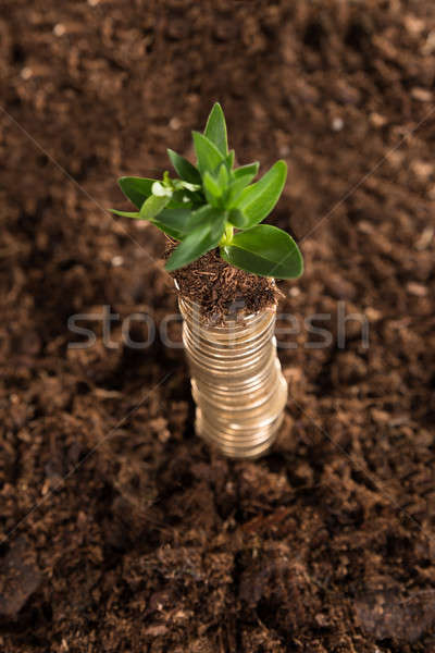 Stack of coins and sapling Stock photo © AndreyPopov