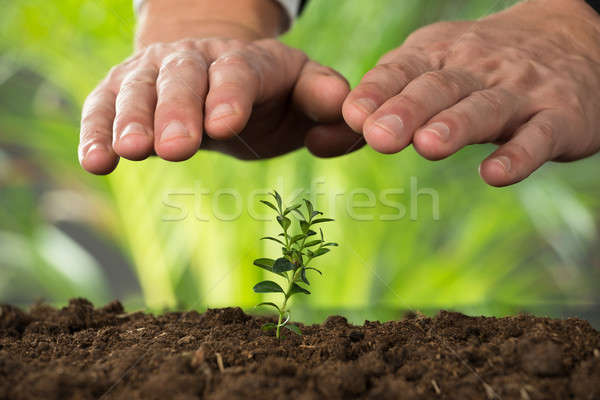 Person Hand Protecting Plant On Land Stock photo © AndreyPopov