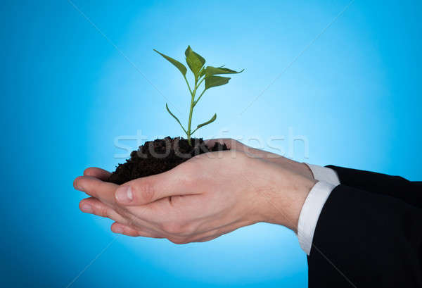 Cropped Image Of Businessman Holding Sapling Stock photo © AndreyPopov