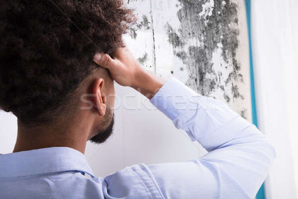 Man Looking At Mold On Wall Stock photo © AndreyPopov