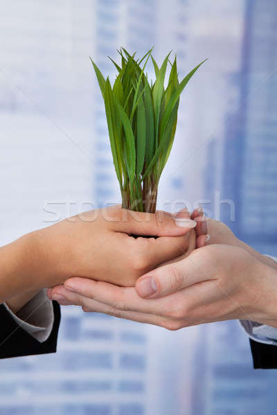 Business People Holding Saplings In Office Stock photo © AndreyPopov
