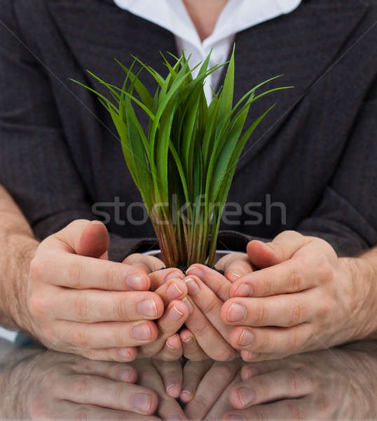 Businesspeople Holding Plant In Cupped Hands Stock photo © AndreyPopov