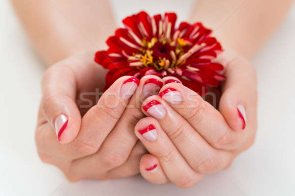 Female Hands With Manicure Nail Holding Gerbera Stock photo © AndreyPopov
