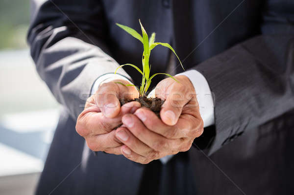 Businessman Holding Sapling Stock photo © AndreyPopov