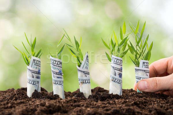 Persona dinero plantas primer plano personas Foto stock © AndreyPopov