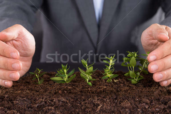 Protecting growing saplings Stock photo © AndreyPopov