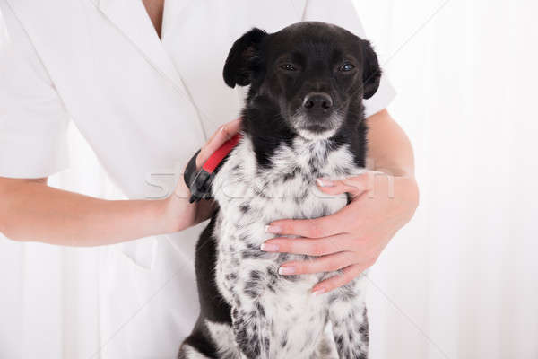 Vet Brushing Dog's Hair Stock photo © AndreyPopov