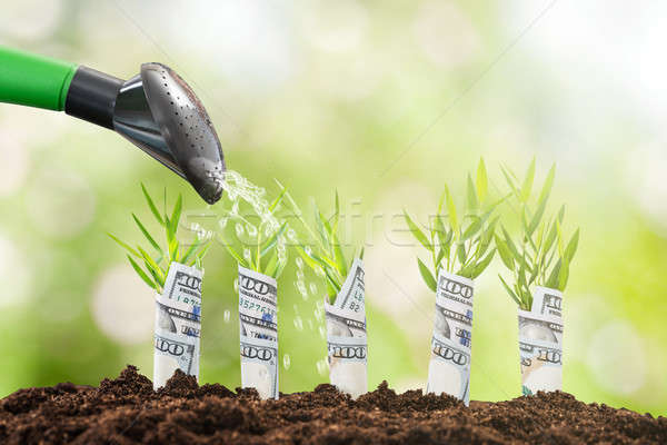 Water Pouring On Plant Rolled With Banknote Stock photo © AndreyPopov