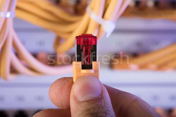Mão rede cabo plugue servidor Foto stock © AndreyPopov