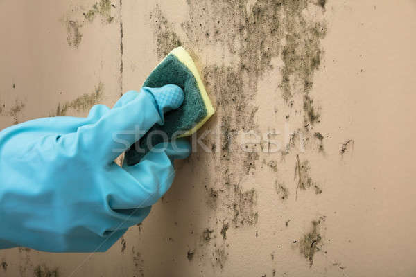 Housekeeper Cleaning Mold From Wall With Sponge Stock photo © AndreyPopov