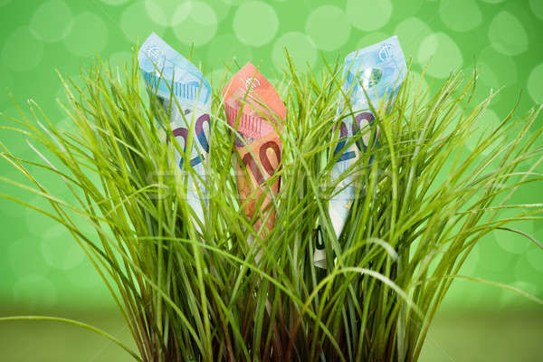 Euro crescente grama grama verde Foto stock © AndreyPopov