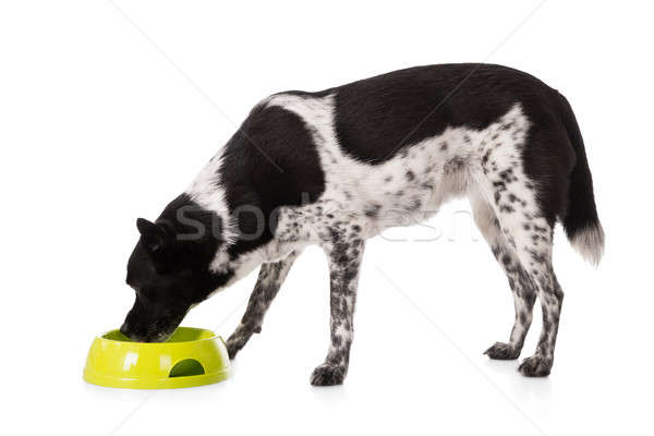 Dog Eating Food From Bowl Stock photo © AndreyPopov