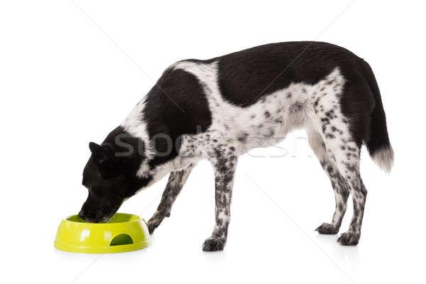 Kutya eszik étel tál fehér háttér Stock fotó © AndreyPopov