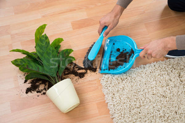 Man Cleaning Mud Spilled From Potted Plant On Floor Stock photo © AndreyPopov
