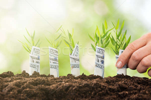 Person Planting Sapling Rolled With Banknote Stock photo © AndreyPopov
