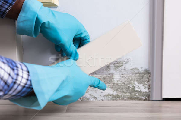 Person Hand Wearing Gloves Checking Moldy Wall Stock photo © AndreyPopov
