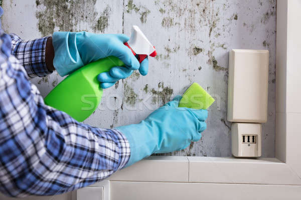 Hand With Glove Cleaning Mold From Wall Stock photo © AndreyPopov