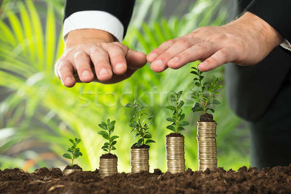 Személy kéz kicsi növény egymásra pakolva érmék Stock fotó © AndreyPopov