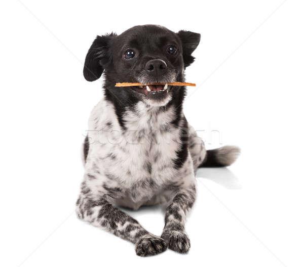 Hond stick mond witte achtergrond ontspannen Stockfoto © AndreyPopov
