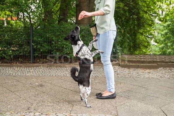 女性 犬 若い女性 通り 靴 ストックフォト © AndreyPopov