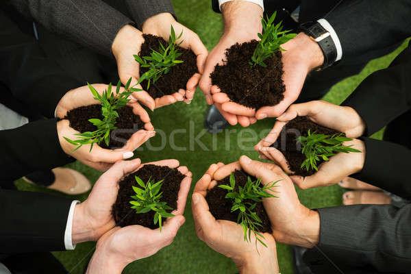 Mãos planta solo grupo Foto stock © AndreyPopov