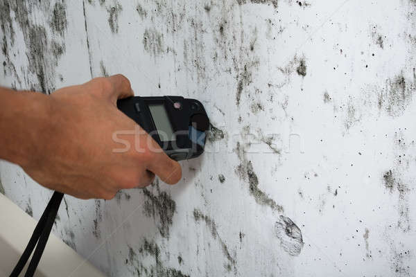 Person Measuring Wetness Of Moldy Wall Stock photo © AndreyPopov