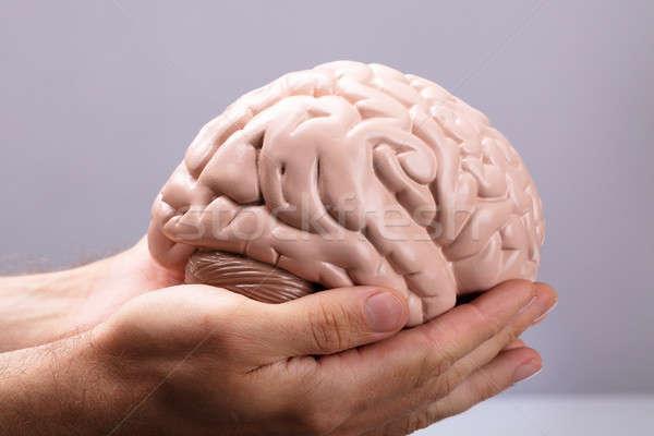 Person's Hand Holding Human Brain Model Stock photo © AndreyPopov