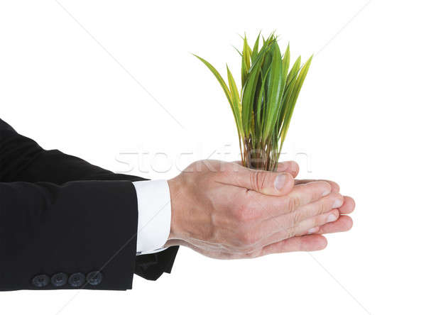 Businessman Holding Saplings Stock photo © AndreyPopov