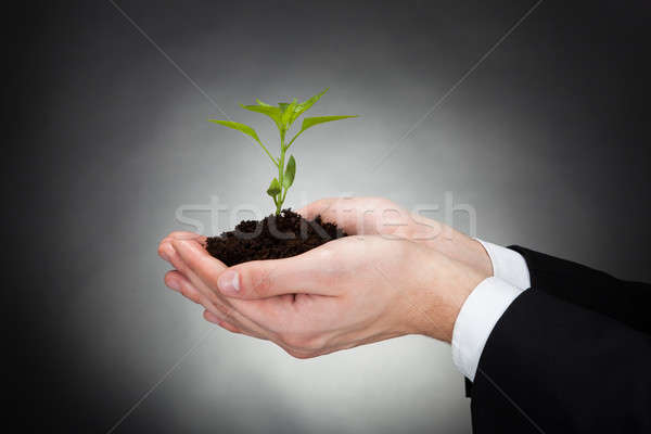 Businessman Holding Sapling Representing Development Stock photo © AndreyPopov