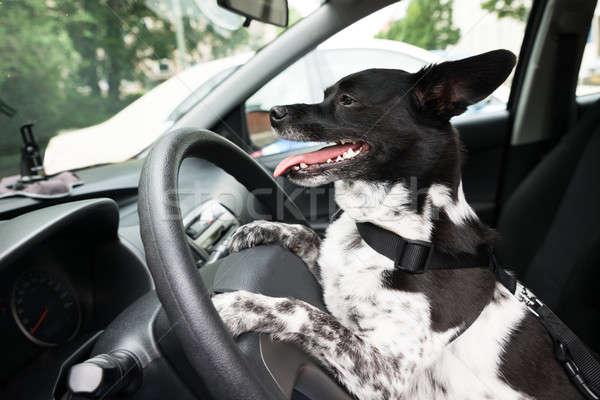 Hond stuur auto zijaanzicht glas Stockfoto © AndreyPopov