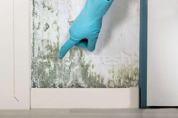 Person Showing The Wall Covered With Lichen Stock photo © AndreyPopov