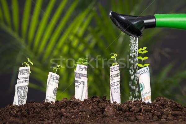 Víz áramló növény locsolókanna tekert bankjegy Stock fotó © AndreyPopov