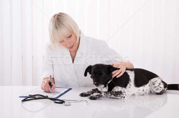 Femminile veterinario iscritto prescrizione cane medici Foto d'archivio © AndreyPopov