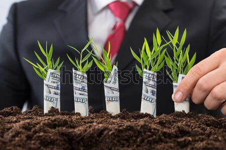 Businessman Holding Saplings At Office Desk Stock photo © AndreyPopov