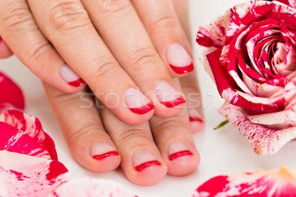 Female Hands With Nail Varnish Near The Rose Stock photo © AndreyPopov