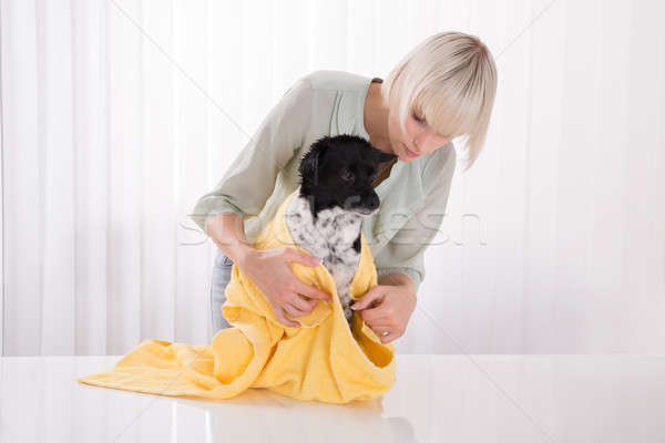 Woman Drying Her Dog With Towel Stock photo © AndreyPopov