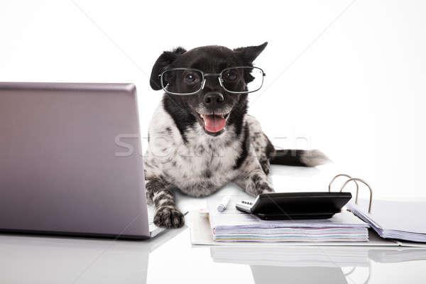 Cane indossare laptop mutui bianco Foto d'archivio © AndreyPopov