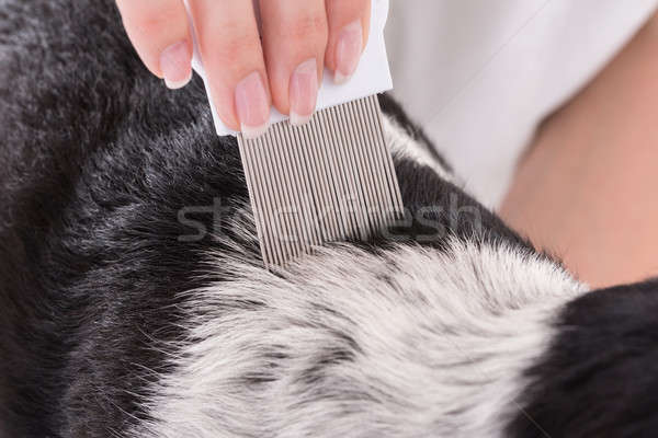 Stock fotó: állatorvos · megvizsgál · kutyák · haj · fésű · közelkép