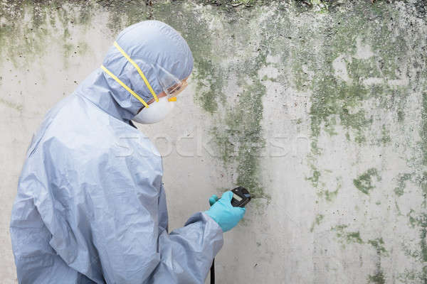 Pest Control Worker Examining Pest On Wall Stock photo © AndreyPopov