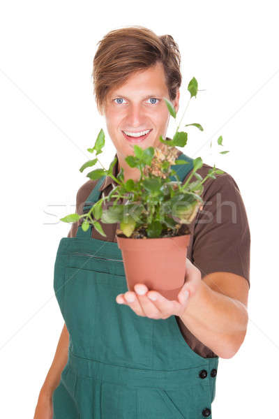 Male Gardener Holding Potted Plant Stock photo © AndreyPopov