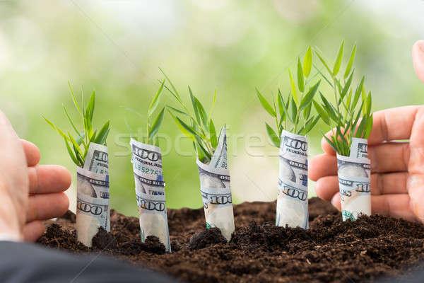 Empresario árbol joven primer plano mano cubierto americano Foto stock © AndreyPopov