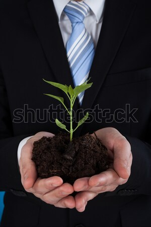 Businessman Holding Sapling Representing Growth Stock photo © AndreyPopov