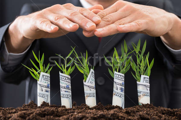 Businessman Protecting Sapling Covered With American Dollars Stock photo © AndreyPopov