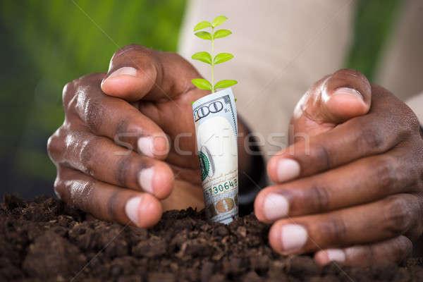 Közelkép személyek kéz növény tekert bankjegy Stock fotó © AndreyPopov